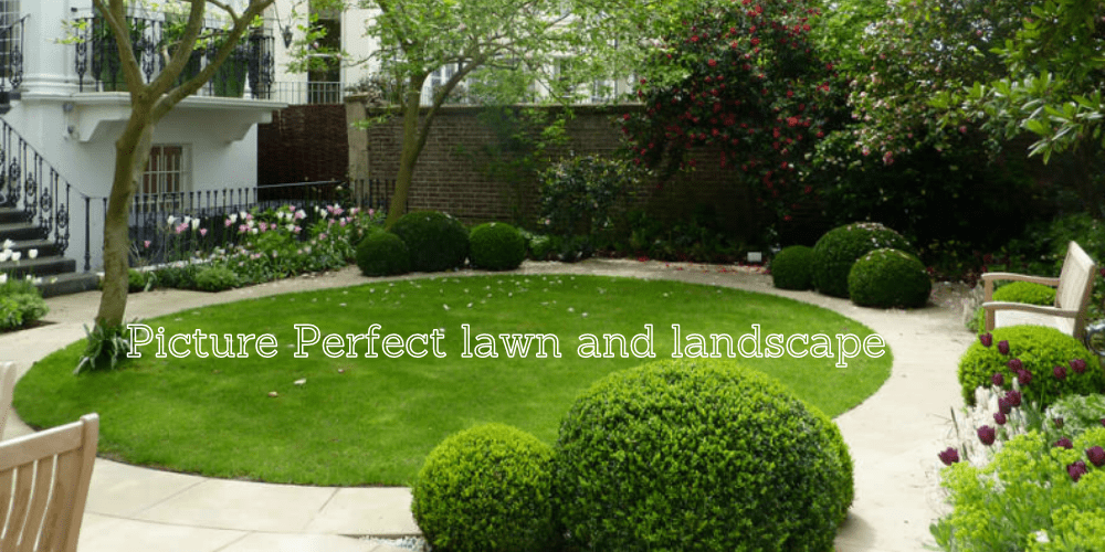 picture perfect lawn and landscape